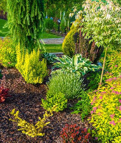 Na fase de planificação, sugerimos aos nossos clientes várias espécies de plantas e flores que se possam enquadrar no meio envolvente e que se adequem ao solo existente. Assim, a nossa equipa opta pelas soluções capazes de garantir a saúde e vivacidade de todo o espaço.