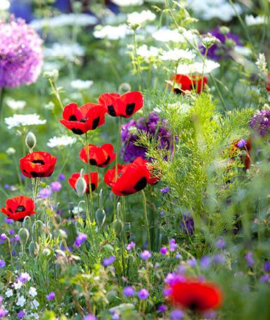 As áreas floridas conferem aos jardins de condomínio alguma personalidade, através da utilização de uma ou várias espécies de flores e conjugando-as com um bom design do espaço. Estas zonas são capazes de dar um aspecto mais cuidado e pessoal aos jardins.